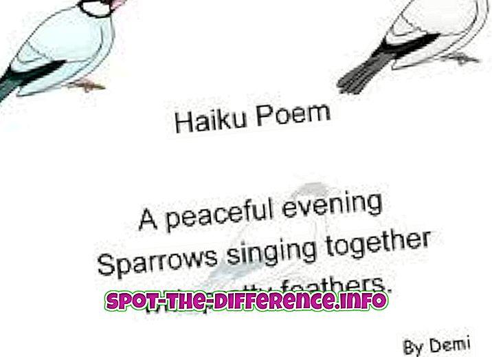 Starpība starp Haiku un Tanku