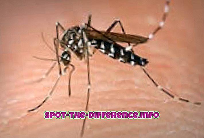 Różnica między komarami a komarami