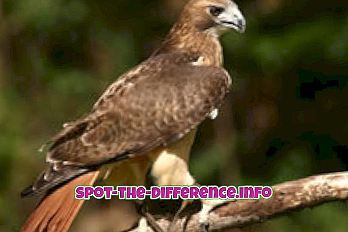 Hawk ja Vulture vaheline erinevus