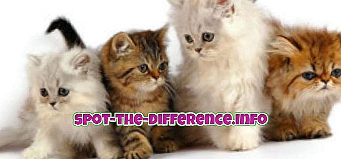 Rozdíl mezi kočkou a psem