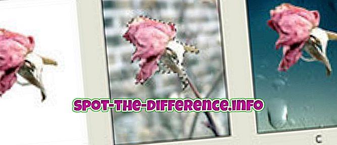 Різниця між маскою та шаром у Photoshop
