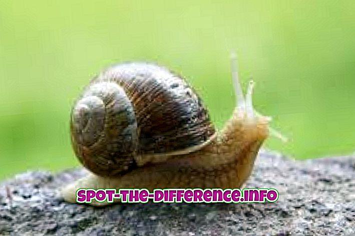 Różnica między ślimakiem a ślimakiem