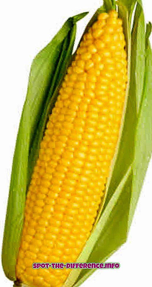 Forskel mellem majs og baby majs