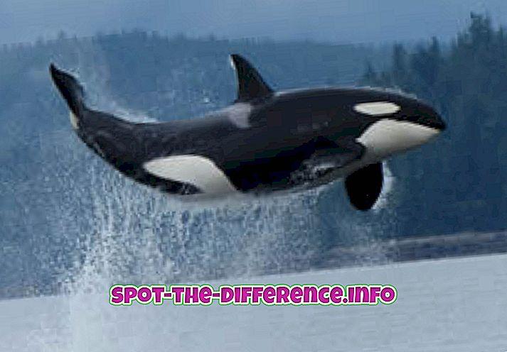 A hal és a bálna közötti különbség