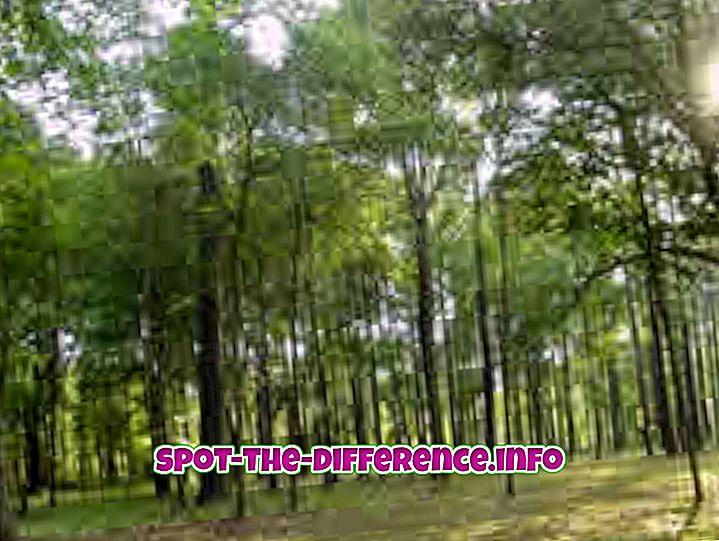 populære sammenligninger: Forskjellen mellom skog og jungel
