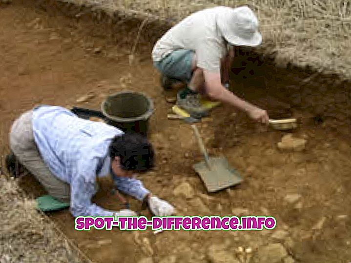 Rozdíl mezi archeologem a antropologem