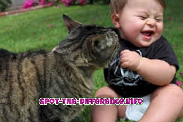 ความแตกต่างระหว่าง Cute และ Beautiful