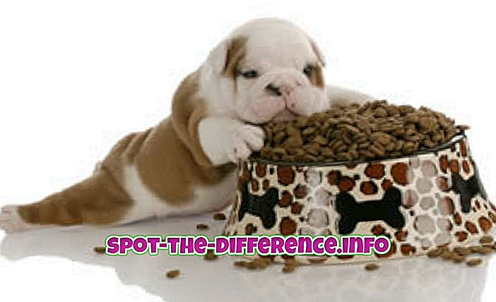 Forskel mellem hund og kattefoder