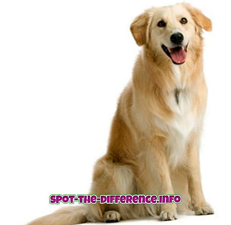 популарна поређења: Разлика између пса и пса
