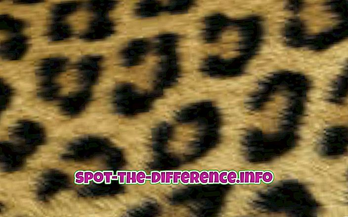 Differenza tra stampa leopardo e ghepardo