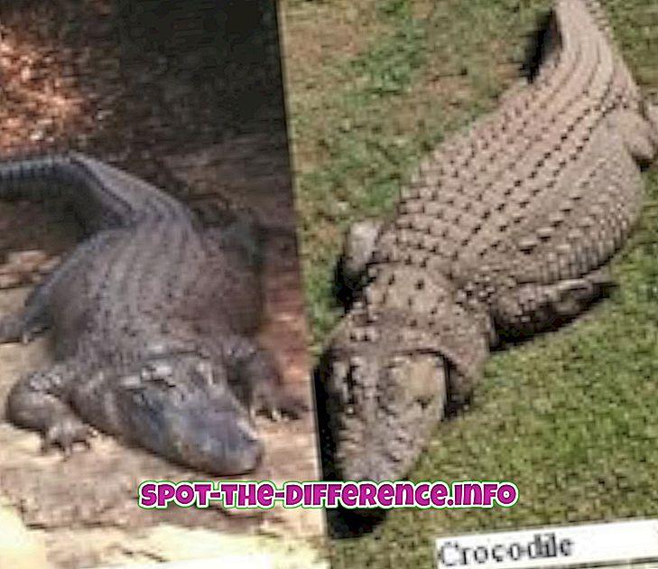 populárne porovnania: Rozdiel medzi Alligator a Crocodile