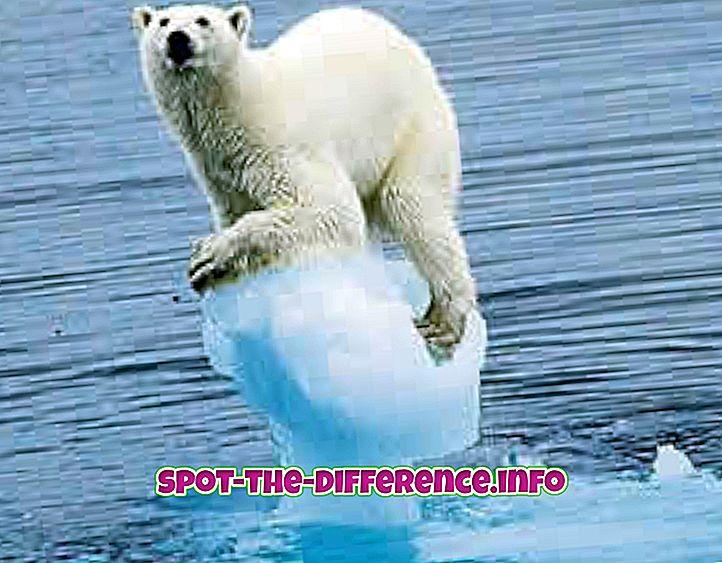 Différence entre climat et saison