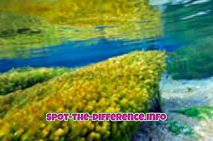 Atšķirība starp aļģēm un sēnēm