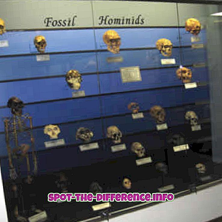 Rozdiel medzi paleoantropológom a archeológom