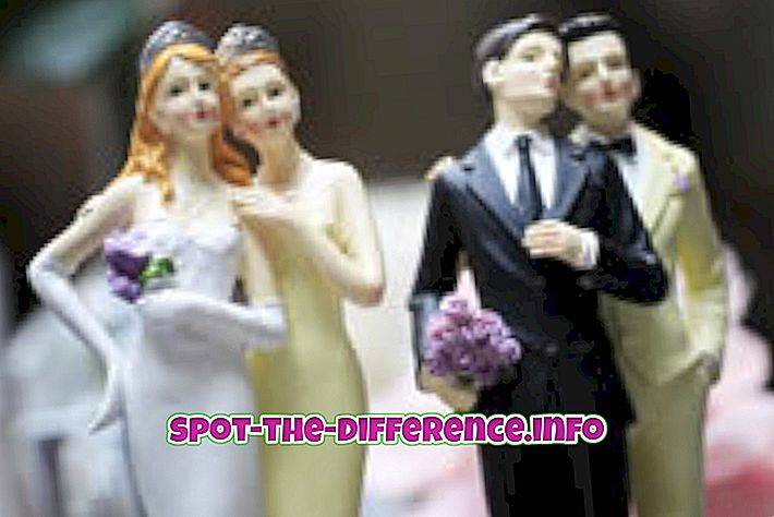 beliebte Vergleiche: Unterschied zwischen Schwul und Bi