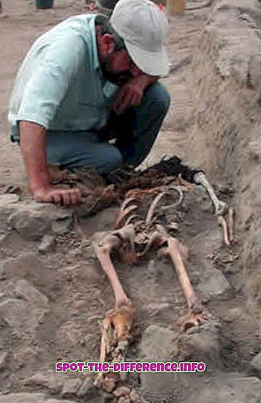 Разлика между археолог и палеонтолог