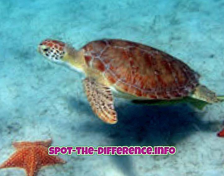 การเปรียบเทียบความนิยม: ความแตกต่างระหว่างเต่ากับเต่า