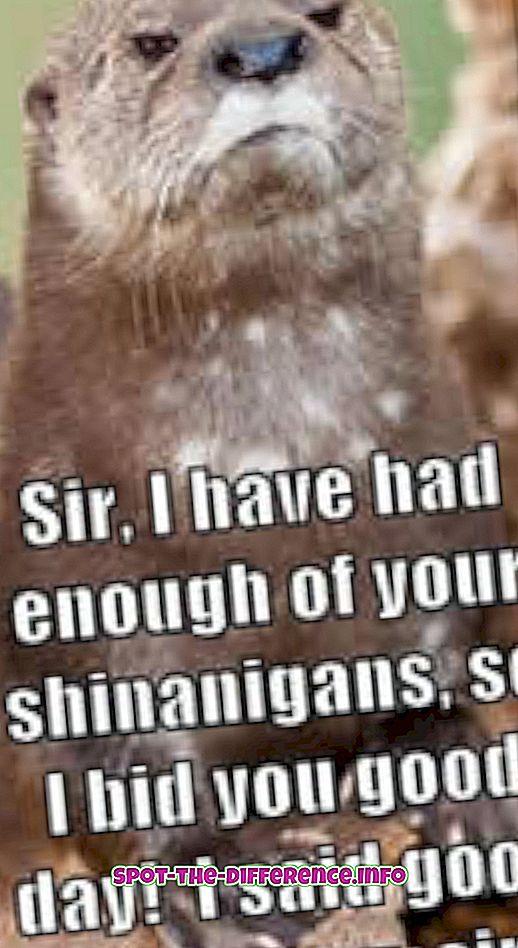 Razlika između Sir i Sire