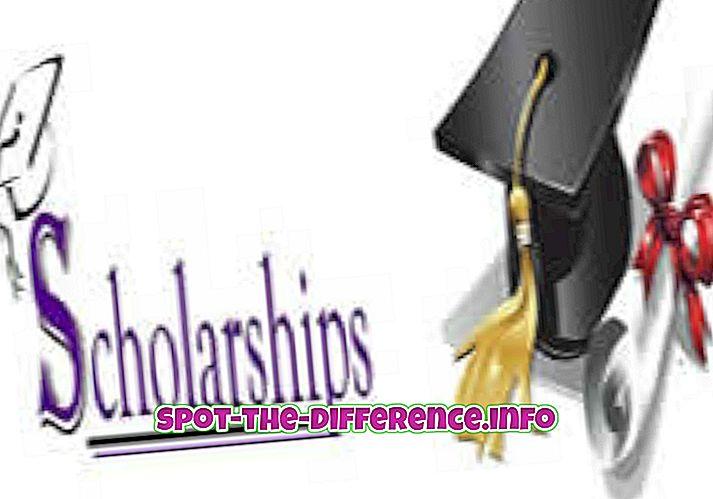 Różnica między stypendium i Freeship