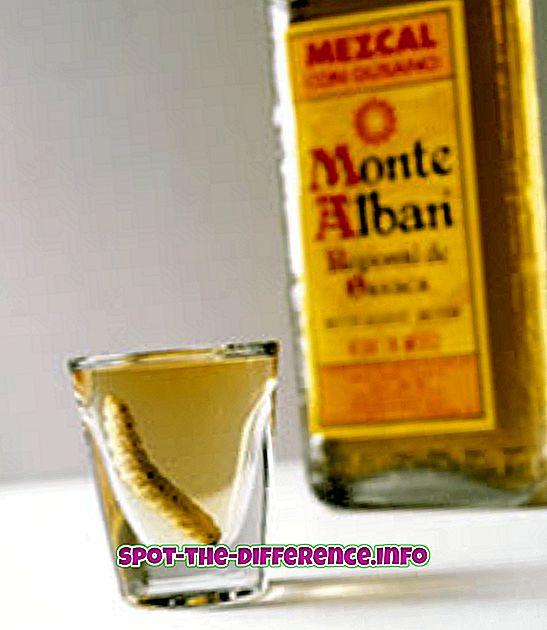 populære sammenligninger: Forskel mellem Tequila og Mezcal