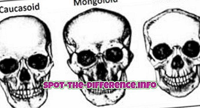 Valge ja kaukaasia vaheline erinevus