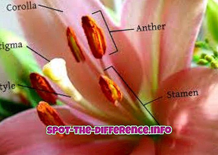 Διαφορά μεταξύ Λουλούδι και Bud