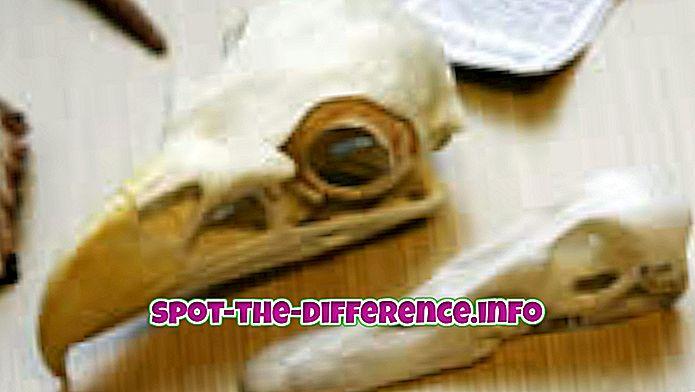 perbandingan populer: Perbedaan antara Penemuan dan Penemuan