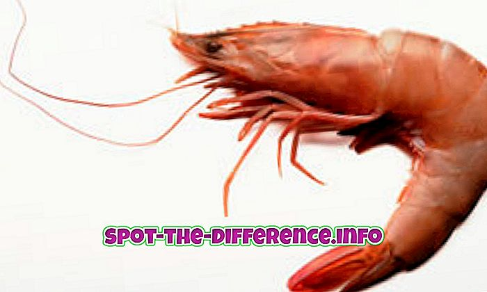 Διαφορά μεταξύ ψαριών και γαρίδας