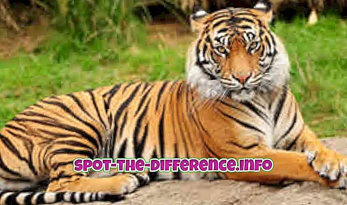 Rozdíl mezi Tygrem, Pantherem a Leopardem