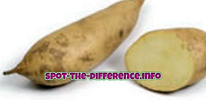 populaarsed võrdlused: Valge ja apelsini magusa kartuli erinevus