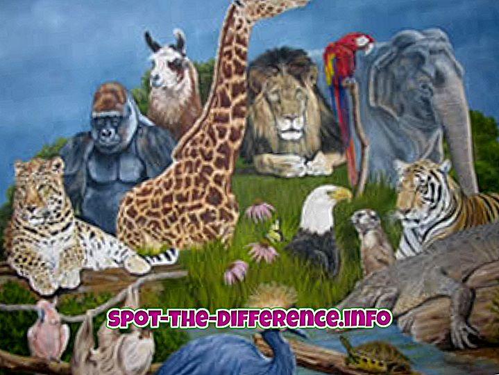 beliebte Vergleiche: Unterschied zwischen Tier und Mensch