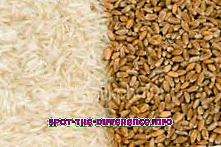 népszerű összehasonlítások: Különbség a gabonafélék és a köles között