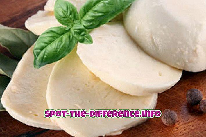 populære sammenligninger: Forskel mellem mozzarellaost og parmesanost