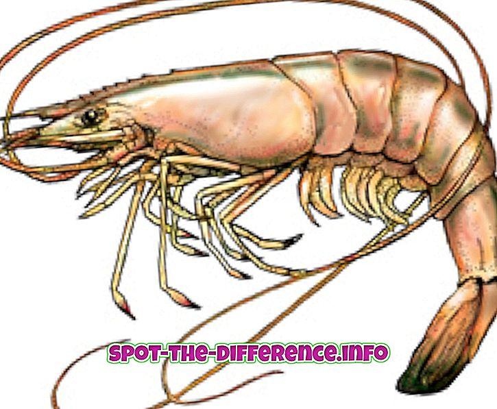 Rozdiel medzi krevety a krevety
