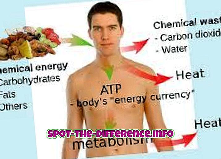 การเปรียบเทียบความนิยม: ความแตกต่างระหว่างการเผาผลาญ, การเผาผลาญอาหารและ Anabolism