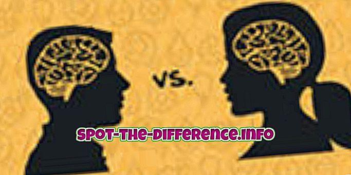 Różnica między żeńskimi i męskimi mózgami