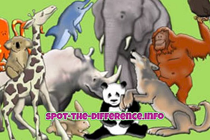 so sánh phổ biến: Sự khác biệt giữa động vật và động vật có vú