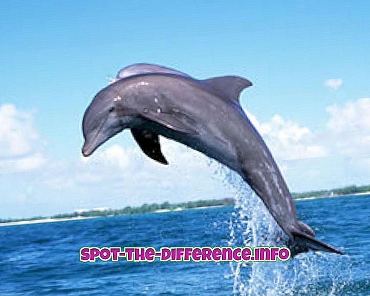 populære sammenligninger: Forskjellen mellom fisk og delfin