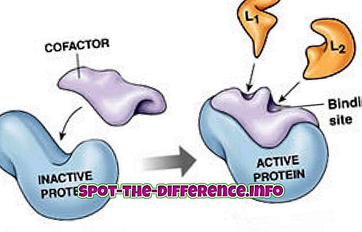 populære sammenligninger: Forskjell mellom Cofactor og Coenzym