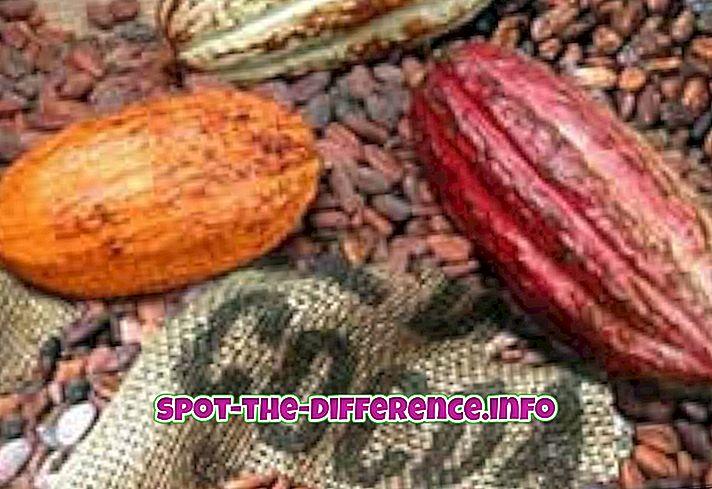 comparaisons populaires: Différence entre le cacao et le cacao