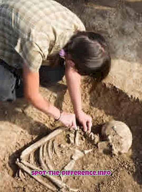 populárne porovnania: Rozdiel medzi archeológom a starožitníkom