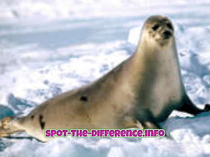 populární srovnání: Rozdíl mezi Otter a Seal